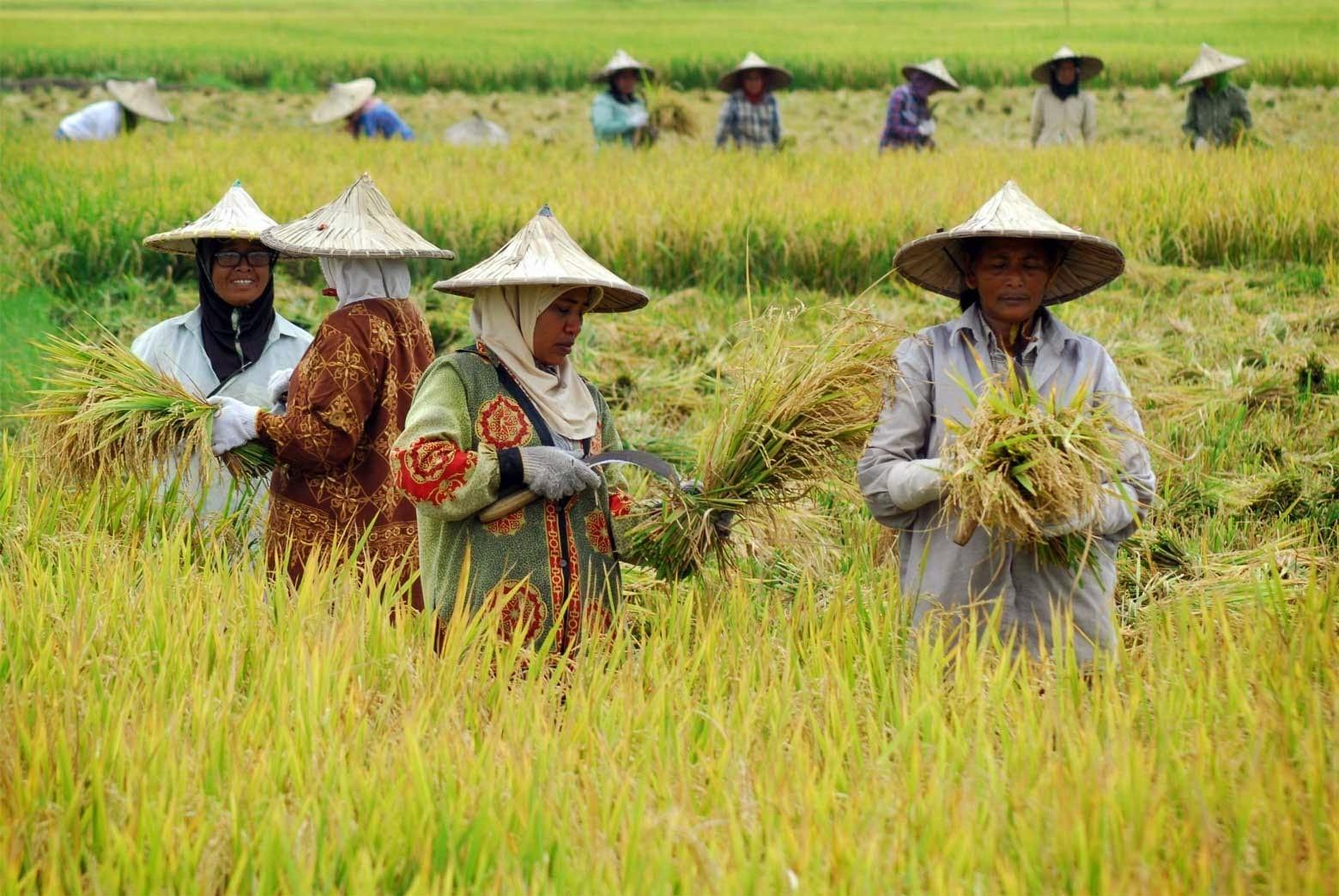 Regenerasi Petani Mandek: Adakah Yang Bercita-cita Menjadi Petani?